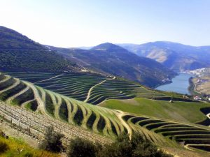 oporto_terraced_vineyards