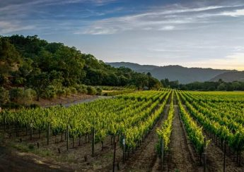 A vineyard in the Napa Valley is the perfect place to produce excellent wines and that is certainly the case when it comes to the Caymus winery and their spectacular vineyard.